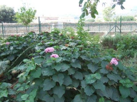(83) Jardin Olbius Riquier - Hyères Dscf0840