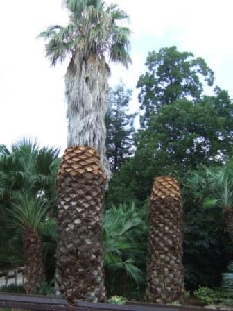 (83) Jardin Olbius Riquier - Hyères Dscf0844