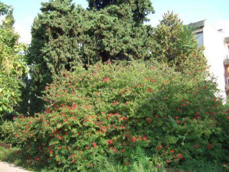 (83) Jardin Olbius Riquier - Hyères Dscf0848