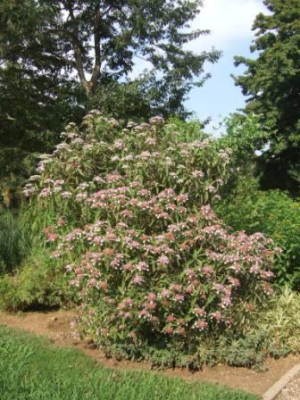 (83) Jardin Olbius Riquier - Hyères Dscf0852
