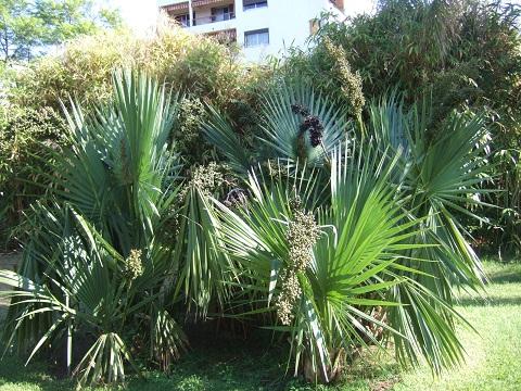(83) Jardin Olbius Riquier - Hyères Dscf0910