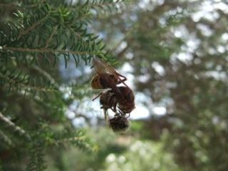 petites bêtes qui montent, qui volent - 1 - Page 13 Dscf0923