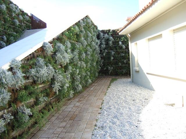 murs végétalisés extérieurs  Dscf1210