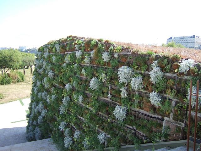 murs végétalisés extérieurs  Dscf1211