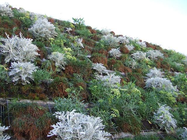 murs végétalisés extérieurs  Dscf1212
