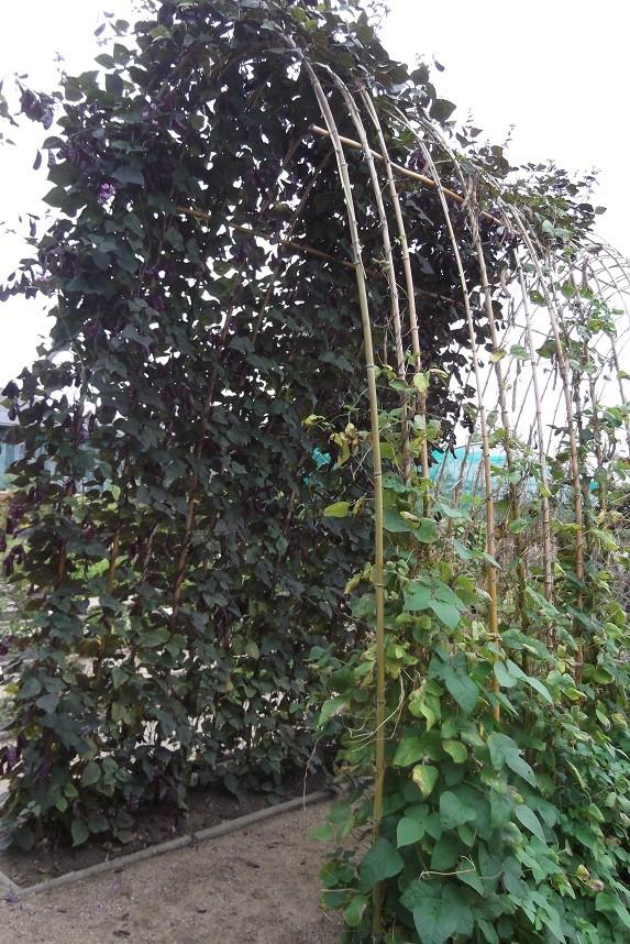 utilisation de bambous - Page 2 Dscf4125