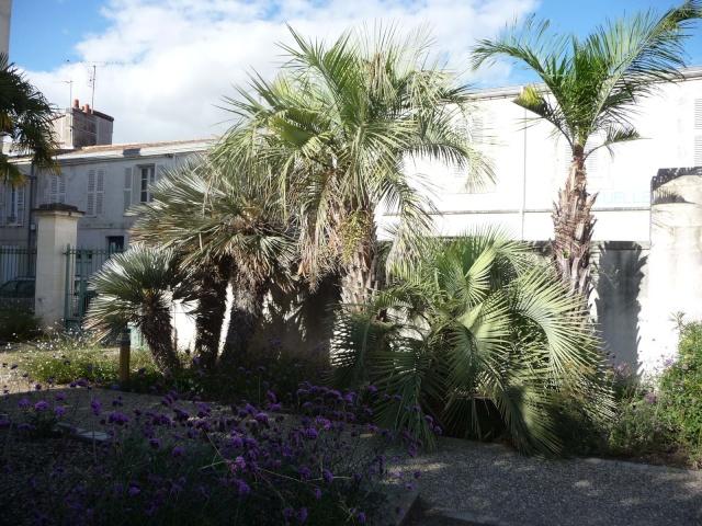 (17) La Rochelle - parcs et aménagements P1000513