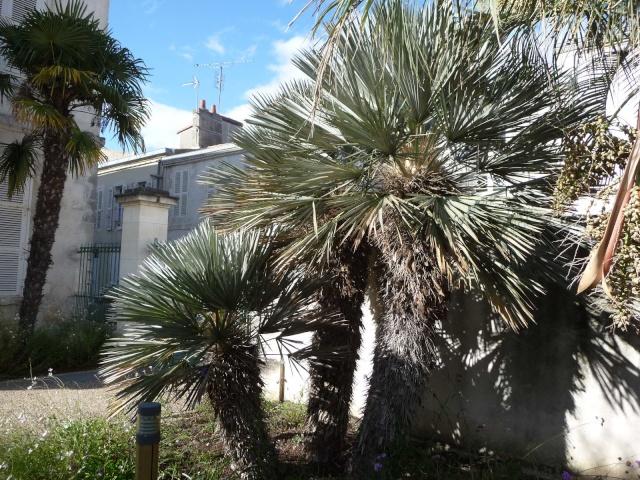 (17) La Rochelle - parcs et aménagements P1000514
