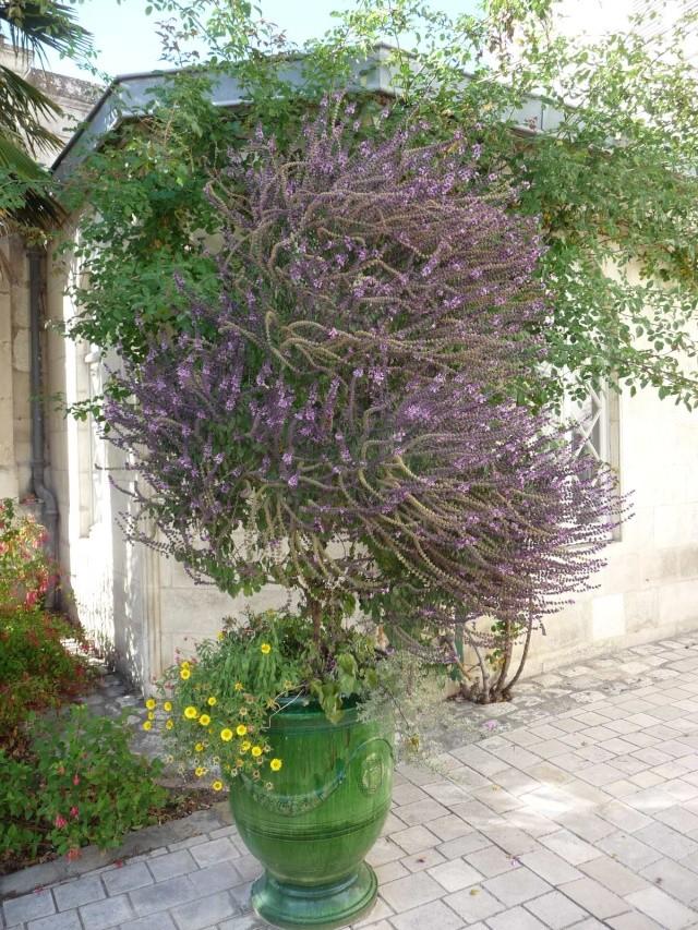(17) La Rochelle - parcs et aménagements P1000515