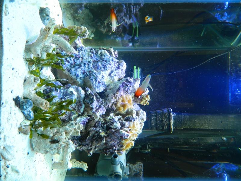 Finaly entered the salt water world.  Dscn4111