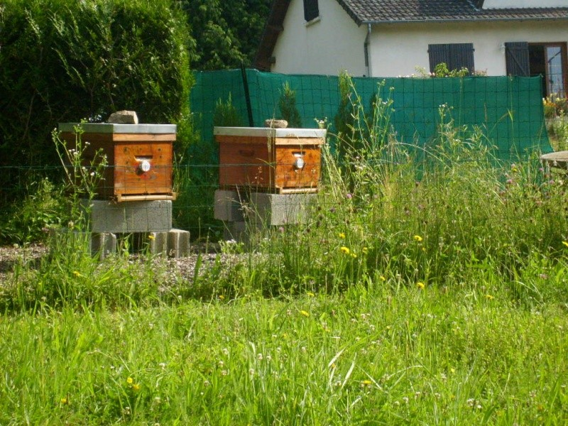 on m'a volé une ruche!!!! :-( - Page 3 S6302112