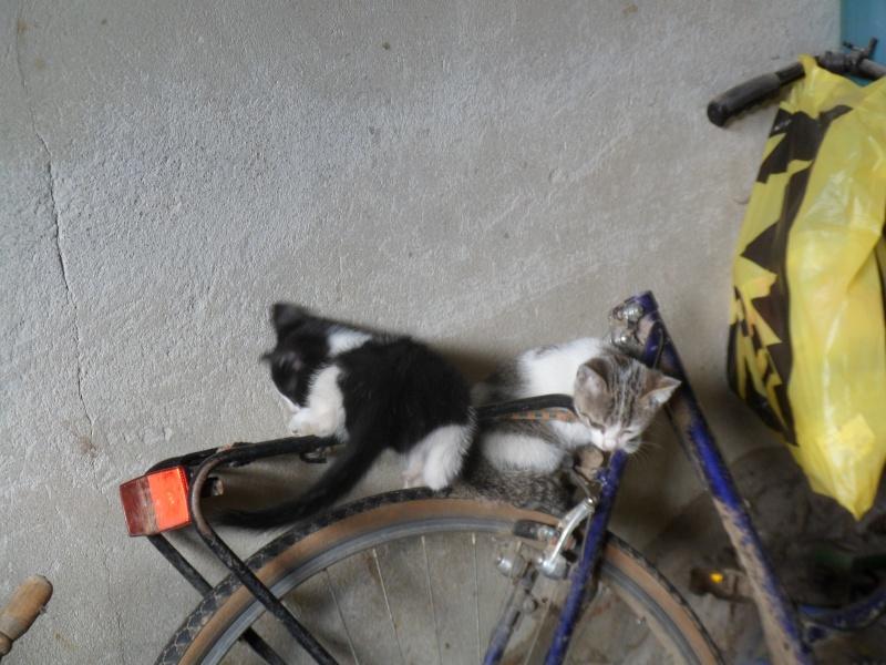 Chatons à donner............ Maintenant ils savent faire du vélo !!!! (photos page 2) 17_08_10