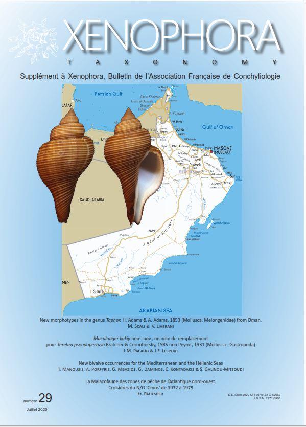 Xenophora N° 171 / Taxonomy N° 29 Captur14