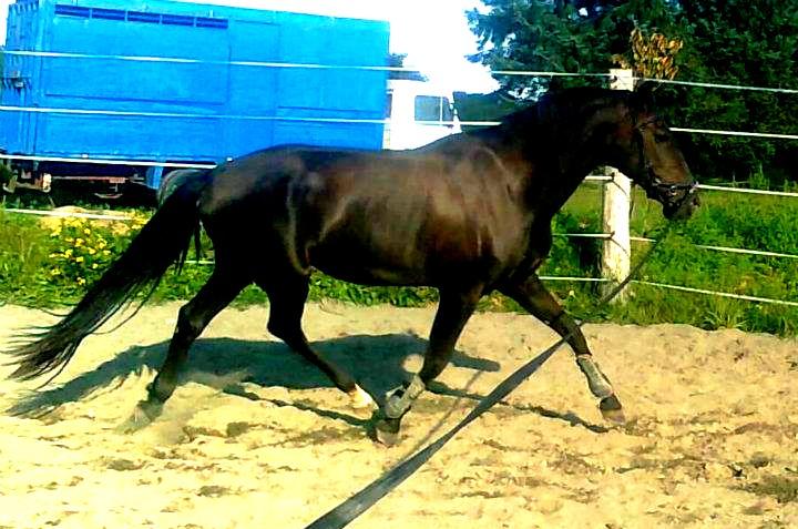 Cours d'équitation → Kermat ♥ - Page 7 31096410