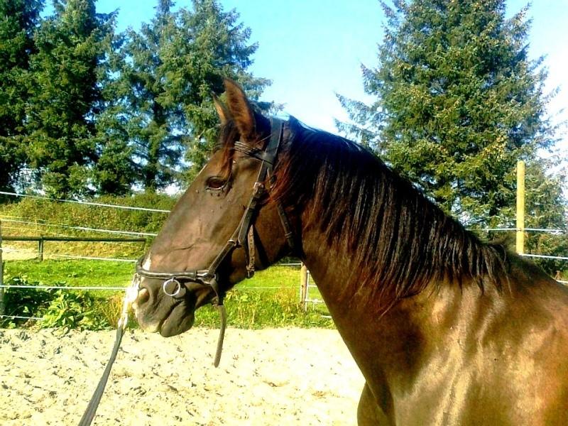 Cours d'équitation → Kermat ♥ - Page 7 Sans_t10