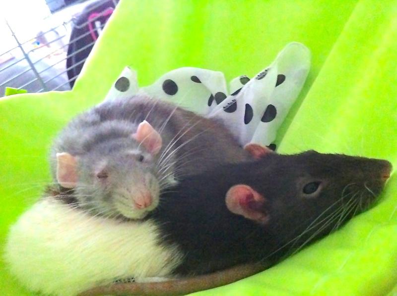 Mes deux filles Kitty,  Miette et chipie la petite nouvelle ^^ Img_0018