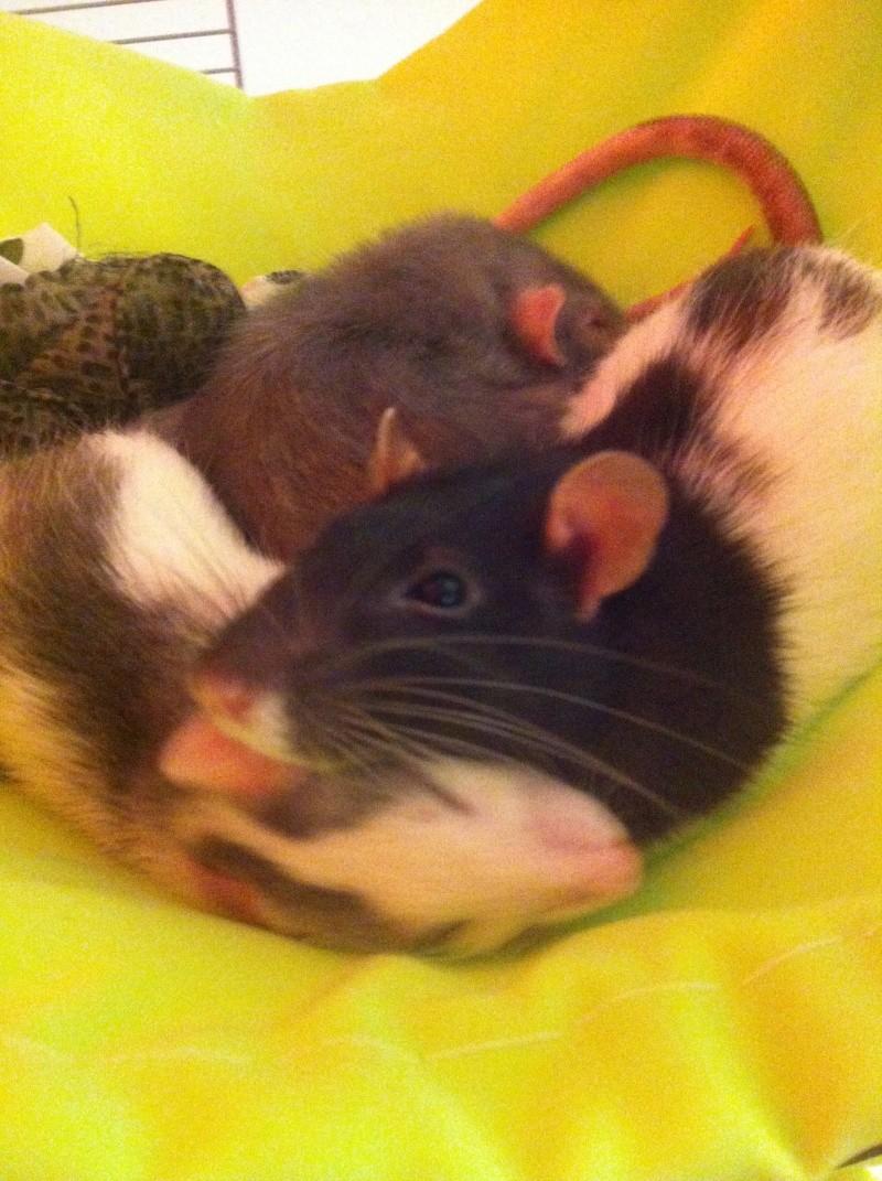 Mes deux filles Kitty,  Miette et chipie la petite nouvelle ^^ Img_0111