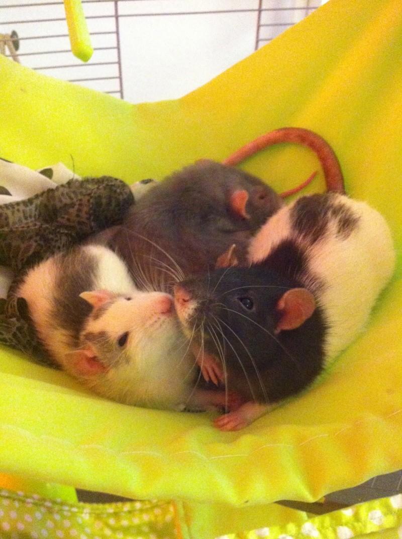 Mes deux filles Kitty,  Miette et chipie la petite nouvelle ^^ Img_0114