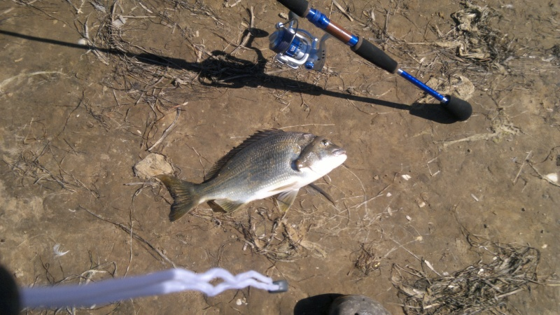 Another Custom Rod By Wiseguy 2012-110