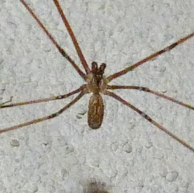 Comment s'appelle cette araignée ? P1050320