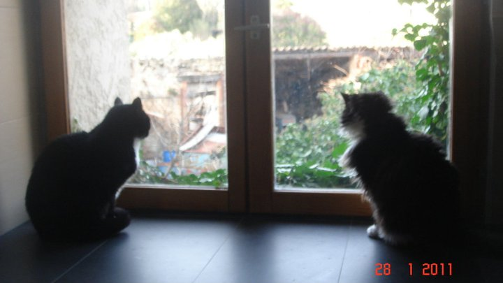 mes amours de bébé chats  Couple10