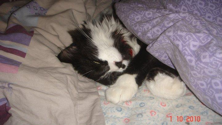 mes amours de bébé chats  Kaine_10