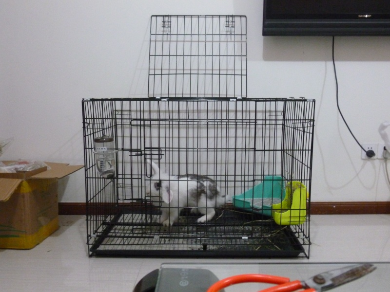 Ma lapine et ma chienne  P1020511