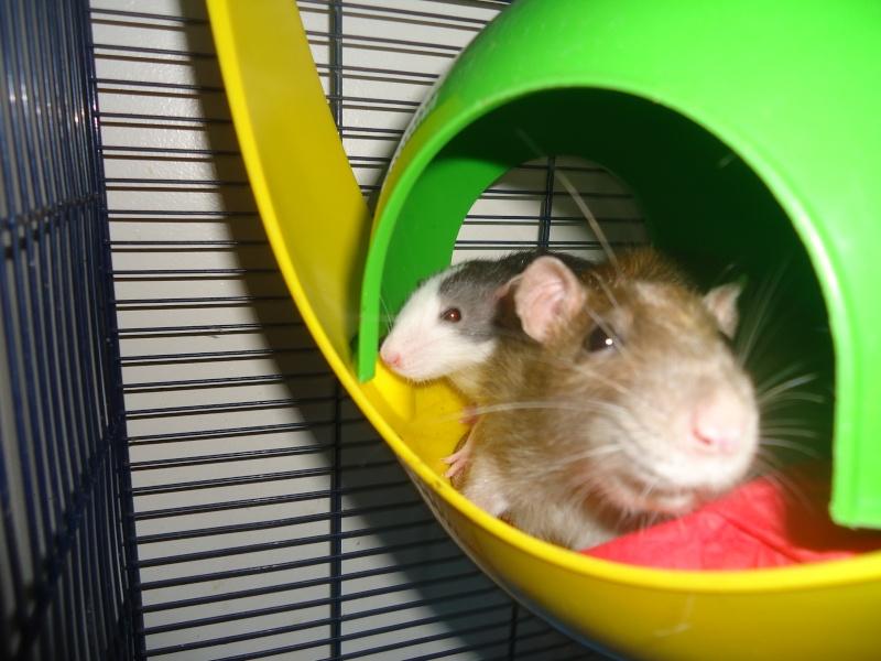 Cookie et Speedy, les ptits husky Dsc01914