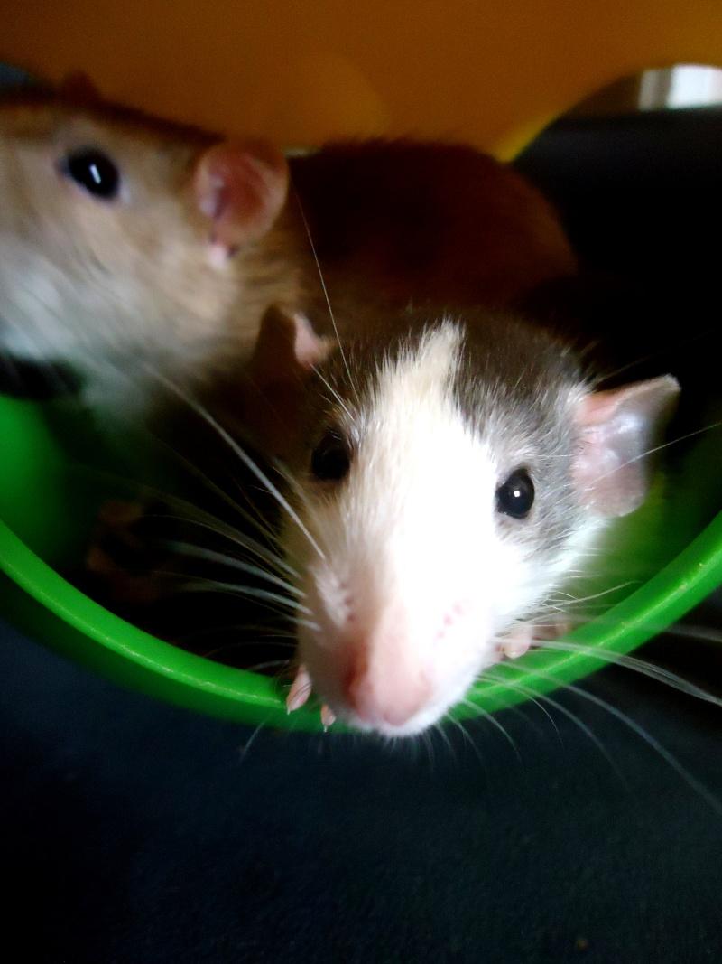 Cookie et Speedy, les ptits husky Dsc02111