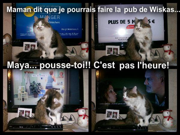 Mes chats: Maya, Léo et Fimo - Page 2 Pizap_17