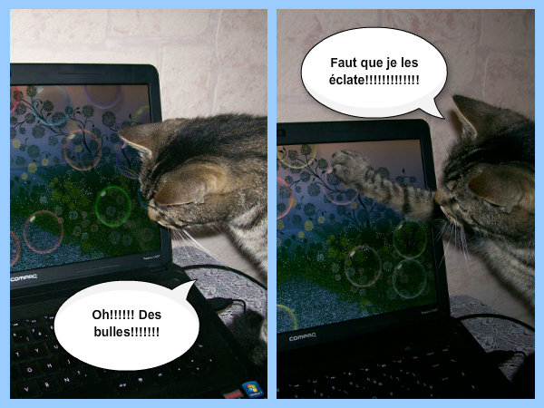 Mes chats: Maya, Léo et Fimo - Page 2 Pizap_18