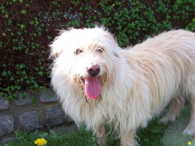 Süßes Hundemädchen wartete 6 Jahre im spanischen Tierheim - vermittelt! 1712
