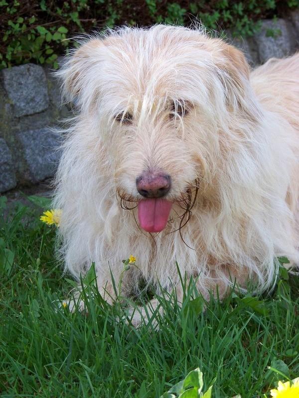Süßes Hundemädchen wartete 6 Jahre im spanischen Tierheim - vermittelt! 2012