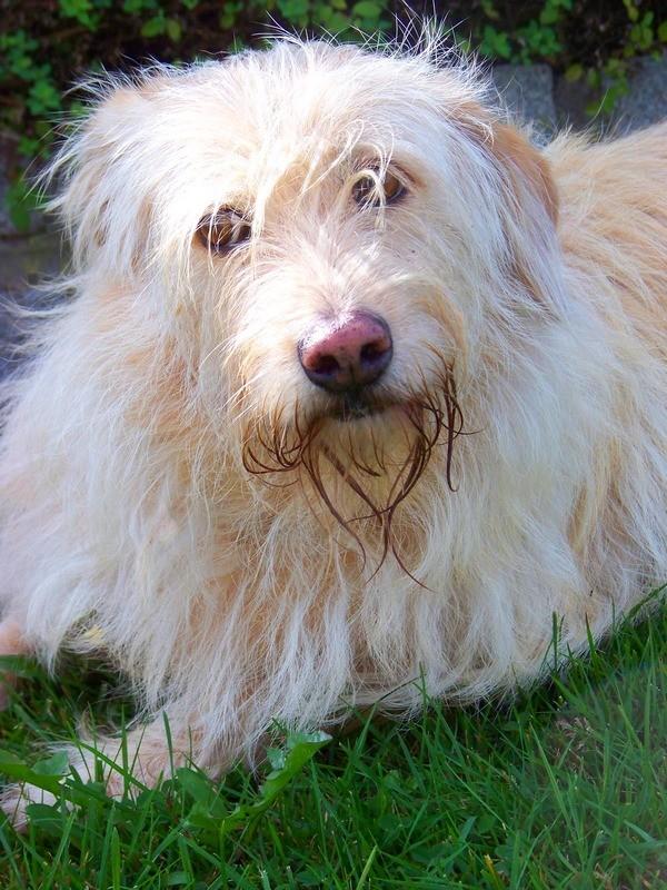 Süßes Hundemädchen wartete 6 Jahre im spanischen Tierheim - vermittelt! 2111