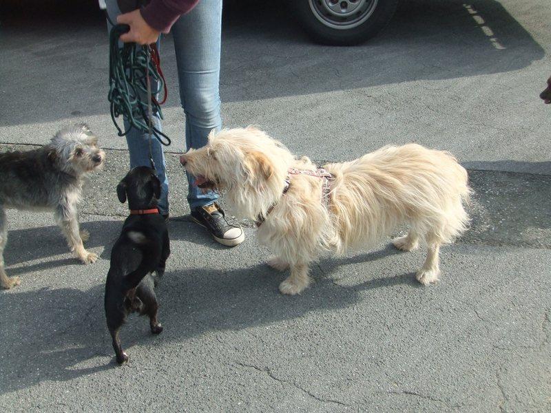 Süßes Hundemädchen wartete 6 Jahre im spanischen Tierheim - vermittelt! 212