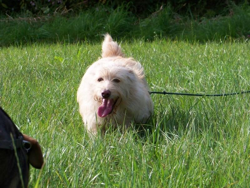 Süßes Hundemädchen wartete 6 Jahre im spanischen Tierheim - vermittelt! 2612