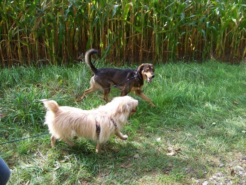 Süßes Hundemädchen wartete 6 Jahre im spanischen Tierheim - vermittelt! 2912