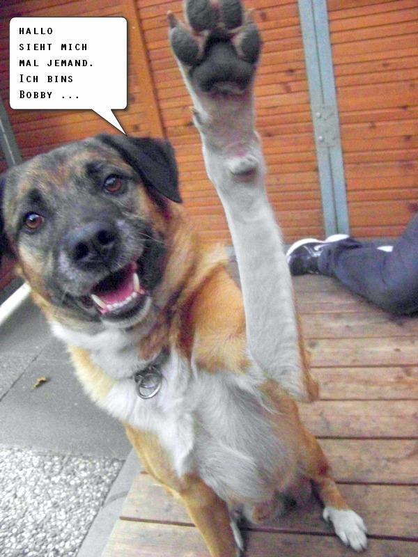 Schäferhund-Heerdenschutzmix (5 Jahre) wartet seit 4 Jahren im Tierheim (NRW). :-(( 3611