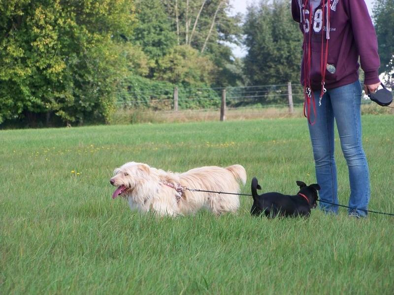 Süßes Hundemädchen wartete 6 Jahre im spanischen Tierheim - vermittelt! 3612