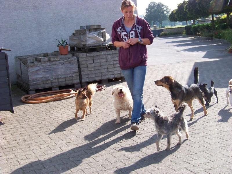 Süßes Hundemädchen wartete 6 Jahre im spanischen Tierheim - vermittelt! 3911