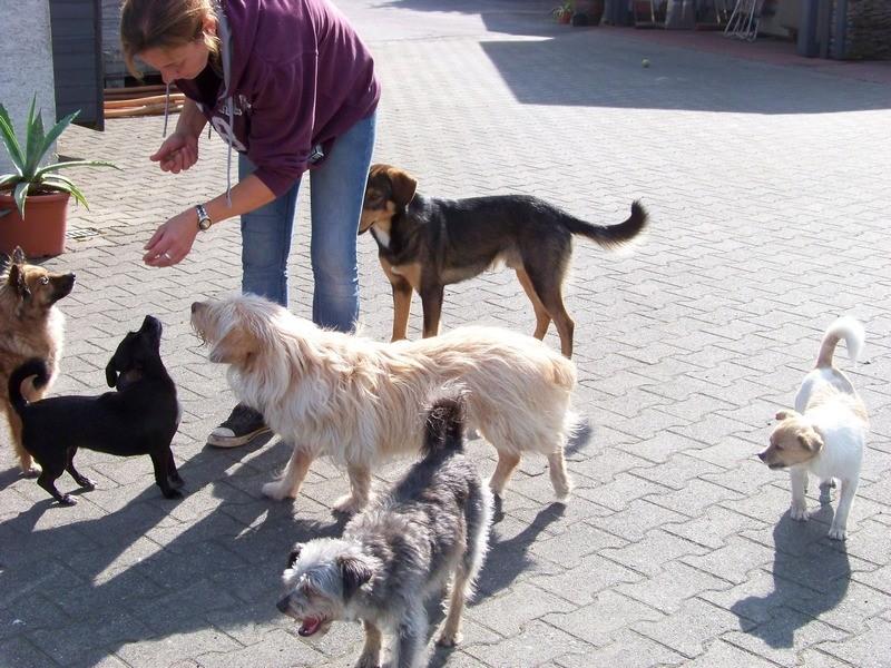 Süßes Hundemädchen wartete 6 Jahre im spanischen Tierheim - vermittelt! 4012