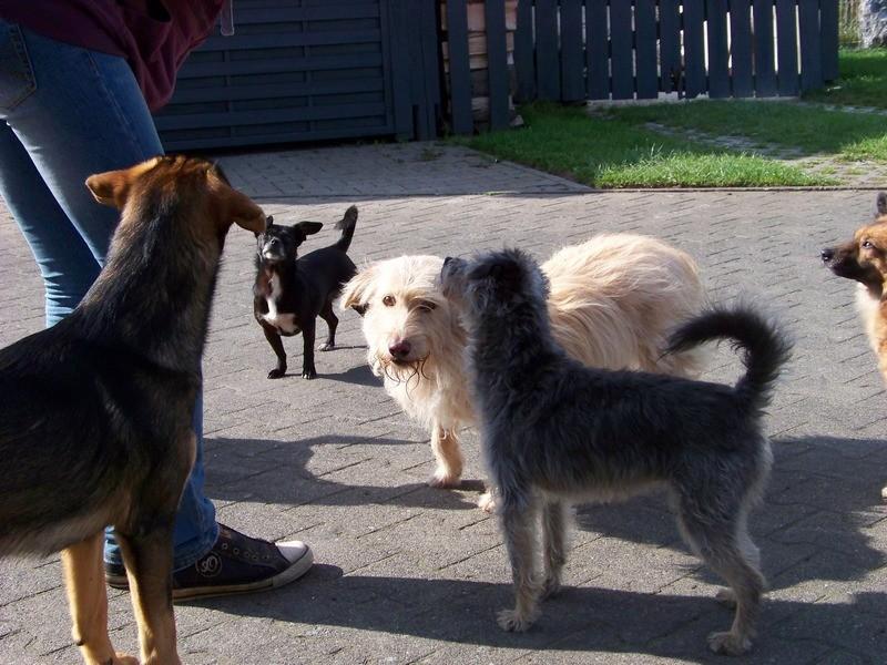 Süßes Hundemädchen wartete 6 Jahre im spanischen Tierheim - vermittelt! 4111
