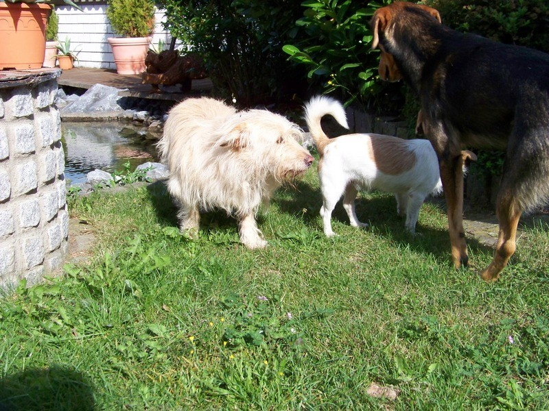 Süßes Hundemädchen wartete 6 Jahre im spanischen Tierheim - vermittelt! 4910