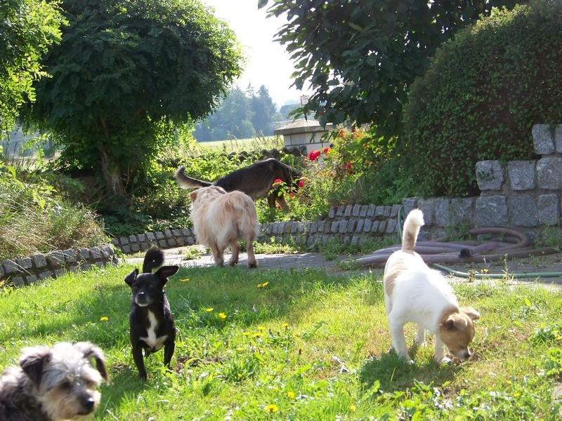 Süßes Hundemädchen wartete 6 Jahre im spanischen Tierheim - vermittelt! 5010