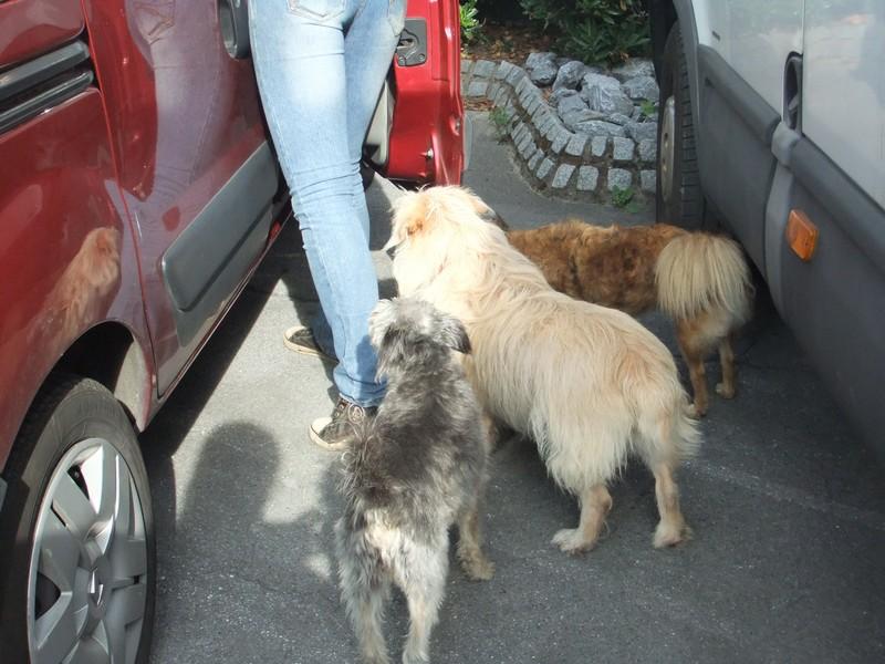 Süßes Hundemädchen wartete 6 Jahre im spanischen Tierheim - vermittelt! 611