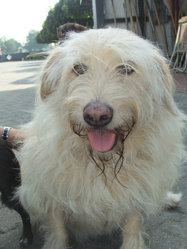 Süßes Hundemädchen wartete 6 Jahre im spanischen Tierheim - vermittelt! 811