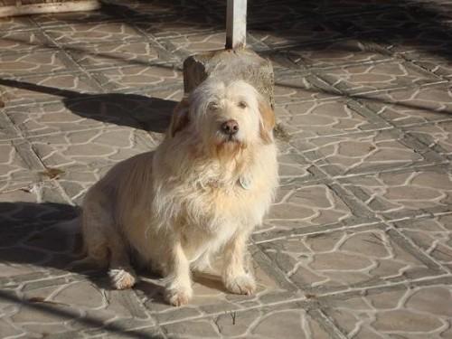 Süßes Hundemädchen wartete 6 Jahre im spanischen Tierheim - vermittelt! Lola10
