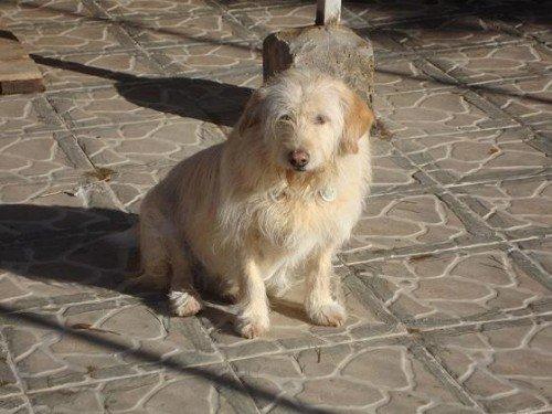 Süßes Hundemädchen wartete 6 Jahre im spanischen Tierheim - vermittelt! Lola110