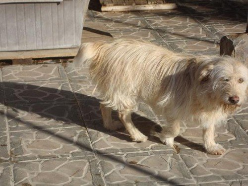 Süßes Hundemädchen wartete 6 Jahre im spanischen Tierheim - vermittelt! Lola210