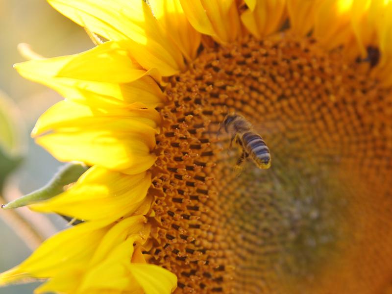 Sommer Sonne Sonnenschein 110